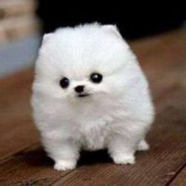 Fluffy White Dogs Names
