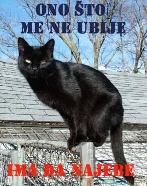 Crni Mačor