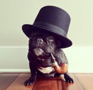 gospodin pas