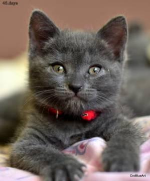 mačkica5