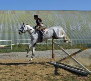 Petra_Konji
