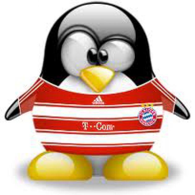 T-COM pingvin