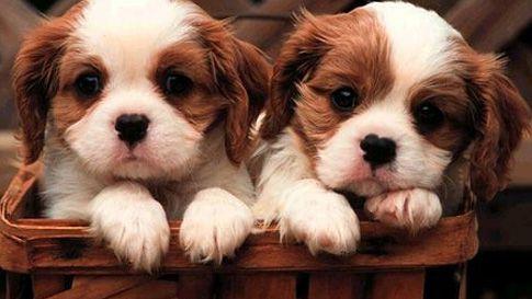 šta nisu slatki?