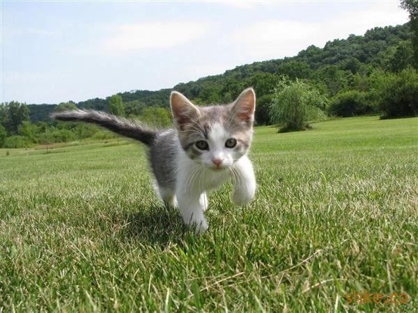 Mačkica <3