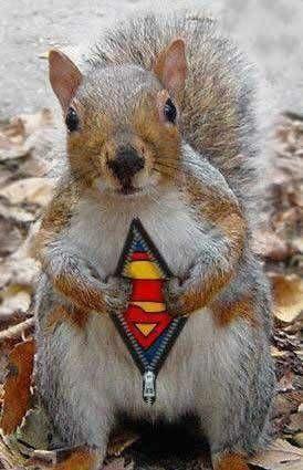super vjeverica