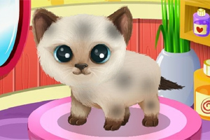 Paws to Beauty 3: Puppies and Kittens Edition